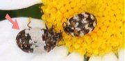 名前不明の昆虫