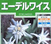 エーデルワイスの種子袋