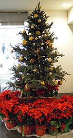 JR静岡駅南口のクリスマス飾り
