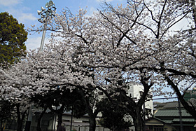 ・2010.04.10 静岡市葵区
