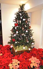 JR静岡駅南口のクリスマスツリー