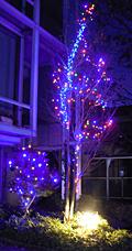 住宅街のクリスマス・イルミネーション