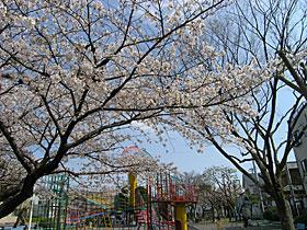 公園のソメイヨシノ 2012.04.08 静岡市葵区