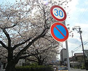 街路のソメイヨシノ 2012.04.08 静岡市葵区