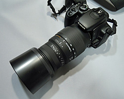 Canon EOS Kiss D-X + SIGMA 70-300mm F4-5.6 DG MACRO