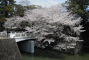 駿府城公園 西門橋のソメイヨシノ 2013.03.26