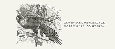 世界自然保護基金ジャパン(WWFジャパン)の'404 File not found'のページ(カロライナインコ)