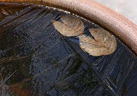 睡蓮鉢に氷