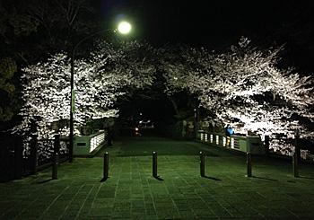 駿府城公園のソメイヨシノ 2014.03.31