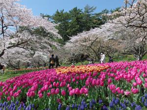 浜名湖花博 2014 はままつフラワーパーク会場 2014.04.05
