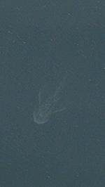 ネス湖の水面に写った数十mの白い影 (iPhoneのApple マップから画像引用)