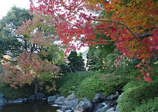 城北公園(静岡市葵区)の日本庭園 2014.11.24