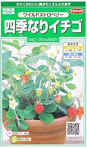 サカタのタネのワイルドストロベリー 「四季なりイチゴ」の種子袋