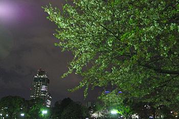 静岡は葉桜です