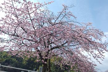 2017.03.12 静岡市葵区 愛宕霊園