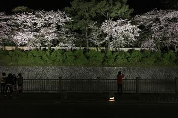 ソメイヨシノ 2017.04.15 静岡市葵区平野部
