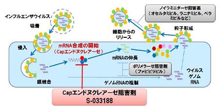 ンフルエンザ感染症治療薬 S-033188 の提携に関するRoche社とのライセンス契約について 2016.02.29/塩野義製薬 から画像引用