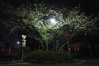 ソメイヨシノ 2018.02.27 静岡市葵区平野部