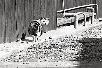 長崎・口之津 1980.03