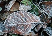 落葉に降りた霜