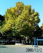 まだ少し緑が残る駿府公園の銀杏