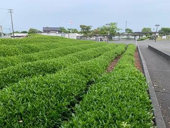 Makinohara102